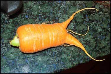 CarrotMonster